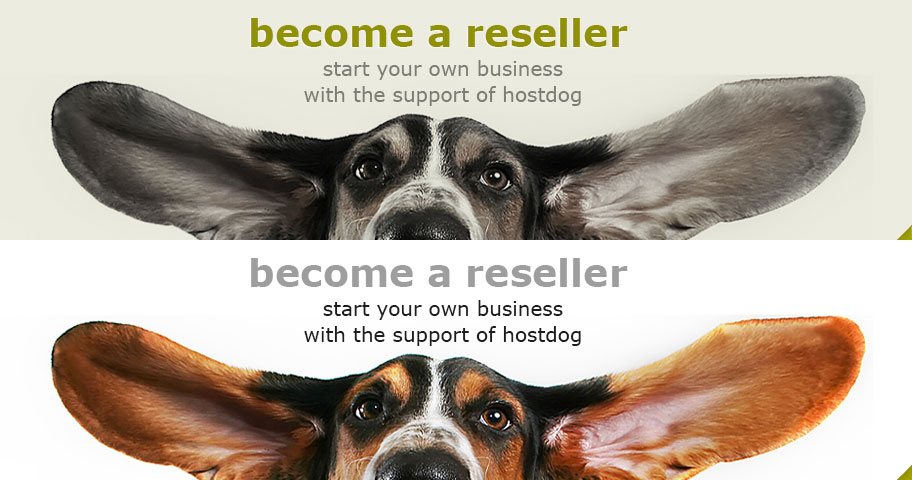 Start your own business with the support of hostdog